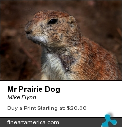 Mr Prairie Dog by Mike Flynn - Photograph - Photoart