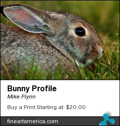 Bunny Profile by Mike Flynn - Photograph - Photoart