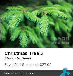 Christmas Tree 3 by Alexander Senin - Photograph