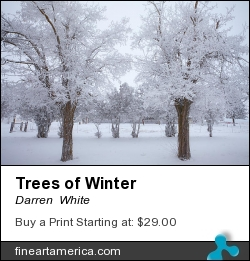 Trees Of Winter by Darren  White - Photograph - Digital Photography