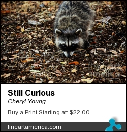 Still Curious by Cheryl Young - Photograph - Photography