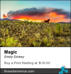 Magic by Emily Dickey - Photograph - Photograph