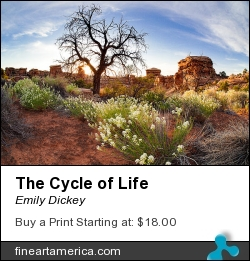 The Cycle Of Life by Emily Dickey - Photograph - Photograph