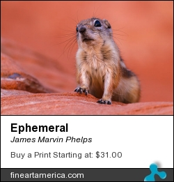 Ephemeral by James Marvin Phelps - Photograph - Digital Photography