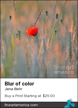 Blur Of Color by Jana Behr - Photograph - Photo