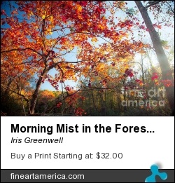 Morning Mist In The Forest by Iris Greenwell - Photograph - Photography