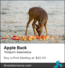 Apple Buck by Torbjorn Swenelius - Photograph - Photography
