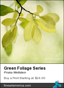 Green Foliage Series by Priska Wettstein - Photograph - Photography