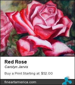 Red Rose by Carolyn Jarvis - Painting - Watercolor
