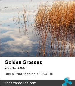 Golden Grasses by Lili Feinstein - Photograph - Photographic Print