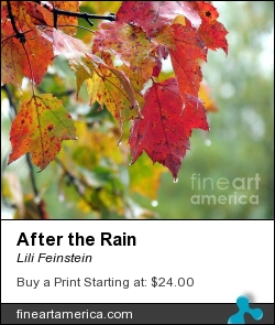 After The Rain by Lili Feinstein - Photograph - Photographic Print