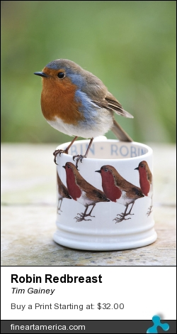 Robin Redbreast by Tim Gainey - Photograph - Photograph