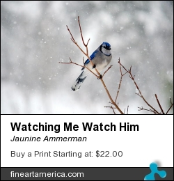Watching Me Watch Him by Jaunine Ammerman - Photograph - Photographs