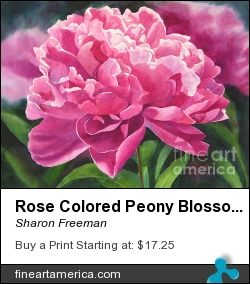 Rose Colored Peony Blossom by Sharon Freeman - Painting - Watercolor On Paper