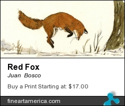 Red Fox by Juan  Bosco - Painting - Watercolor On Paper