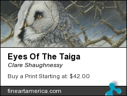 Eyes Of The Taiga by Clare Shaughnessy - Painting - Oil On Canvas