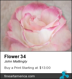Flower 34 by John Mattingly - Digital Art - Photograph