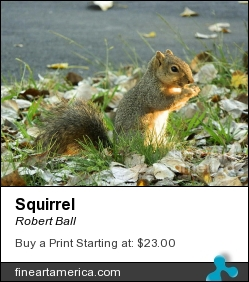 Squirrel by Robert Ball - Photograph - Photography