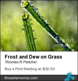 Frost And Dew On Grass by Thomas R Fletcher - Photograph - Photography