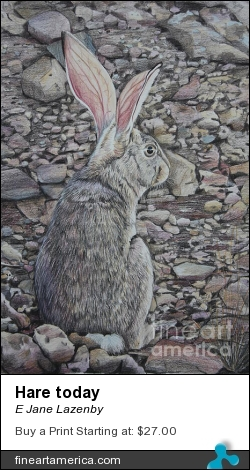 Hare Today by E Jane Lazenby - Painting - Coloured Pencil