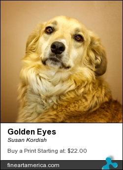 Golden Eyes by Susan Kordish - Photograph - Photography/digital Art