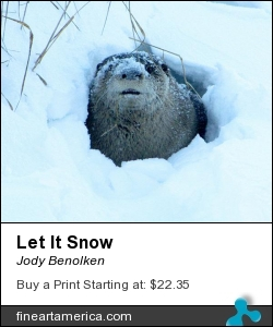 Let It Snow by Jody Benolken - Photograph - Photograph