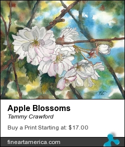 Apple Blossoms by Tammy Crawford - Painting - Watercolor