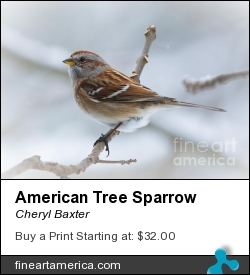 American Tree Sparrow by Cheryl Baxter - Photograph - Photography