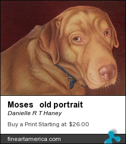 Moses Old Portrait by Danielle R T Haney - Drawing - Colored Pencil On Paper
