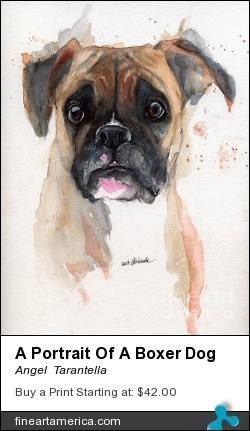 A Portrait Of A Boxer Dog by Angel  Tarantella - Painting - Watercolor Painting