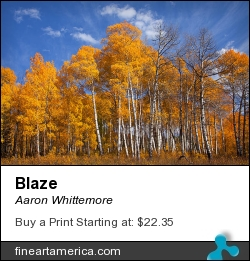 Blaze by Aaron Whittemore - Photograph - Photographic Images